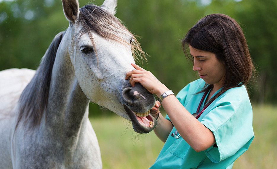 Veterinary Assistant with Horse Care Management